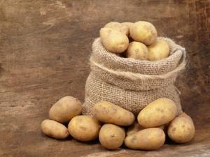 Erntefrisch vom Kartoffelacker